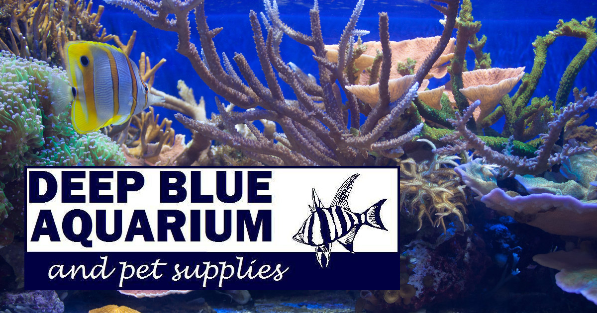 Deep Blue Aquarium Pet Supplies Whyalla For All Your