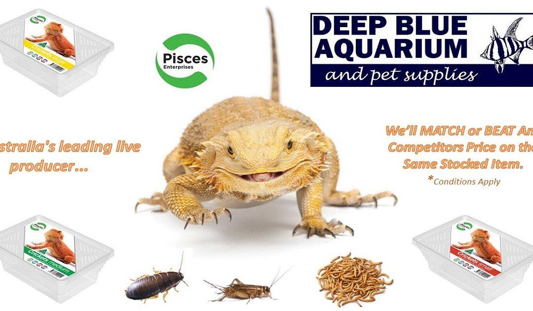 Deep Blue Aquarium Pet Supplies Whyalla Whats New At Deep Blue